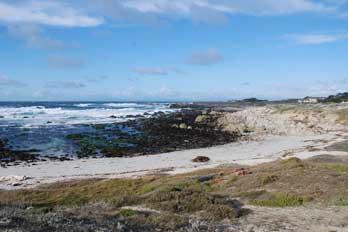 Asilomar State Beach Monterey Ca